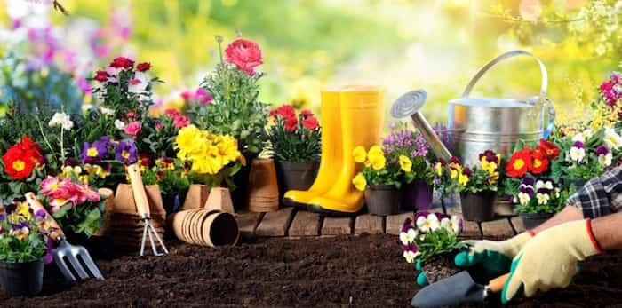 Good gardening tips for all